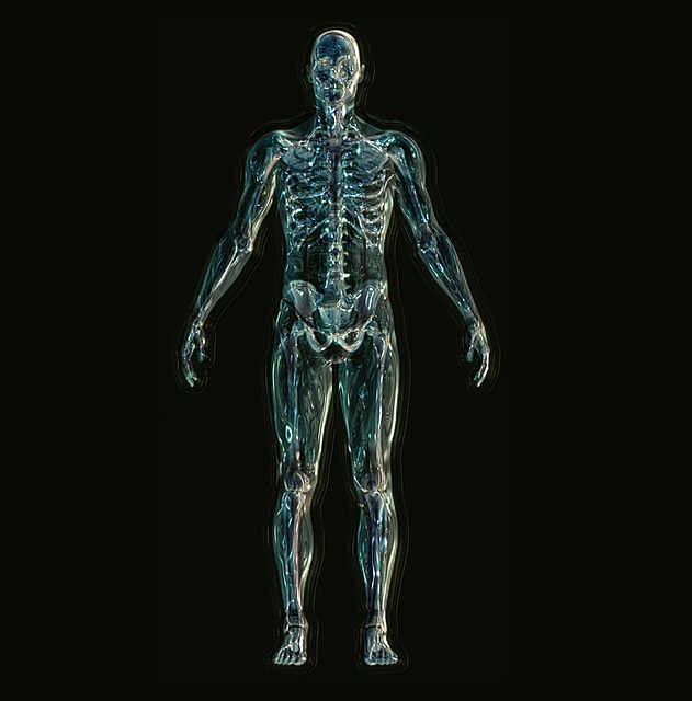 Bones and Muscles in Human Body