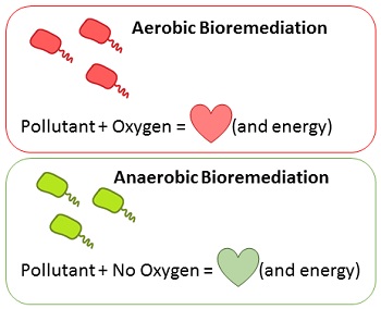 Aerobic and Anaerobic